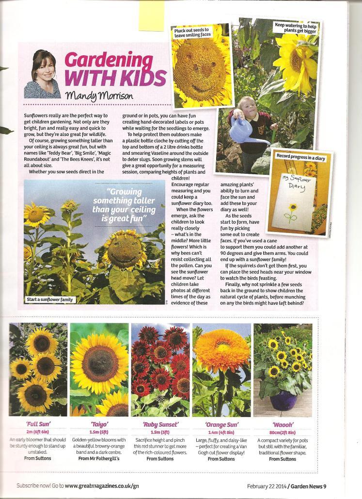 Garden News article 22nd Feb 2014 Sunflowers